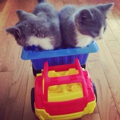 Two kitten construction workers on their way to the worksite. | 25 Animal Pictures That Will Restore Your Faith In Animals