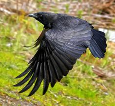 """500px / Photo """"I, Crow"""" by James Two Crows"""