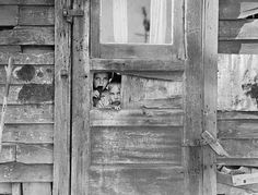 Two children and the wooden shack that they call home. It was taken in early 1940 near the tellingly named Weedpatch. The rent for a week was $2.75 plus electricity. Dorothea Lange