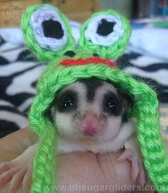 Sugar Glider Hats available for picture time at NH Sugar Gliders! Lots of different ones to choose from.