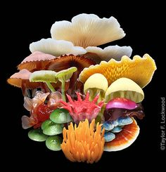 A rainbow of Fungi. Colorful mushrooms. Photo illustration by Taylor Lockwood.