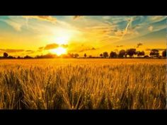 Sting - Fields of Gold Will you stay with me, will you be my love.among the fields of barley. Fields Of Gold, Yellow Fields, Field Wallpaper, Sunset Wallpaper, Landscape Wallpaper, Hd Wallpaper, Landscape Background, Nature Wallpaper, Background Images