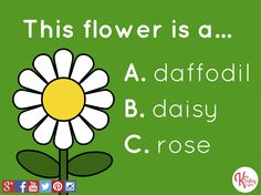 Quiz: what's this flower's name? Daisy!