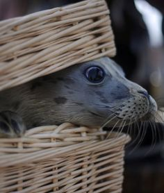 Oh, nothing. Just a basket seal.