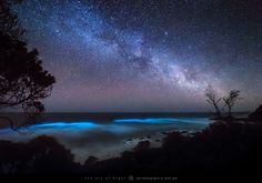 Bioluminescence Under A Starry Sky | One of the things I lov… | Flickr