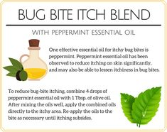 For those wondering how to treat bug bites, how to reduce bug bite swelling, and how to stop bug bites from itching without resorting to using harsh ingredients, this peppermint essential oil bug bite itch blend offers a promising solution.
