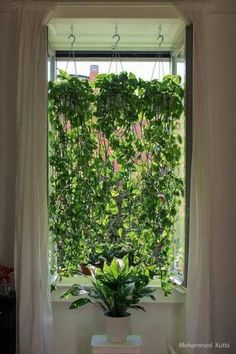 How Mohammed Kutbi, an architect from Milan, realized systems in a minimal living space and window view. Plants used: – Golden Pothos (Epipremnum aureum) – Peace lily (Spathiphyllum) – Privacy screen – House Plants Bloğ Peace Lily, Plantas Indoor, Window Plants, Indoor Window Planter, Outdoor Planters, Plants On Balcony, Vine House Plants, House Plants Decor, Patio Plants