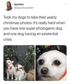 51 Most Popular Funny Cute Dogs Hilarious Funny Animal Jokes, Really Funny Memes, Cute Funny Animals, Stupid Funny Memes, Funny Animal Pictures, Funny Relatable Memes, Animal Memes, Cute Baby Animals, Haha Funny