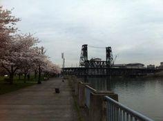 Portland Sakura