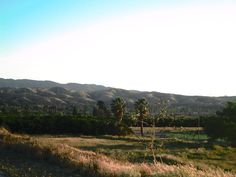 Late afternoon in Southern California with the view of palm trees, and an orange field.