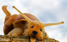 Puppy Snail - Worth1000 Contests
