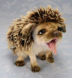 Praline the Hedgehog by Ma'Sal Creations