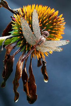 from: 5 Important Benefits Of Macro Photography In Nature