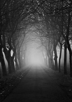 """500px / Photo """"into the fog"""" by Bart Deburgh"""
