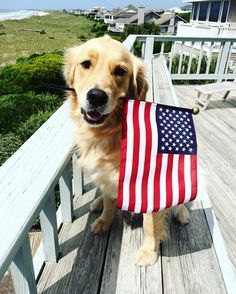 Patiently waiting to celebrate the 4th of July!