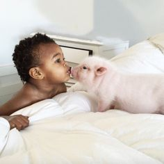 beautiful baby kissing an adorable little pig
