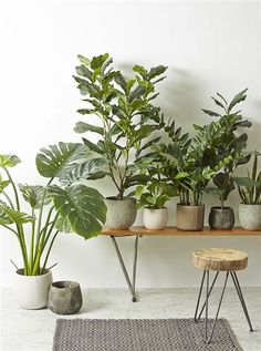 Rogue trees and potted plants - Albi - Product Showroom 2014 See them at Reed Gift Fairs Melbourne August Stand: Q101. Cant believe they aren't real!