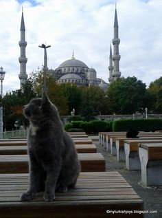 Cats at the Blue Mosque, Istanbul Turkey
