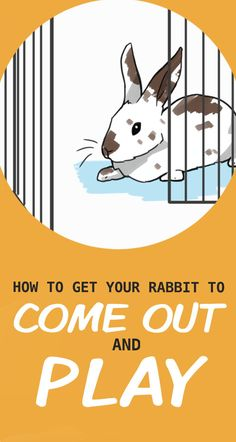 House Rabbit, Pet Rabbit, Bun Bun, Buns, Bunny Rescue, Rabbit Behavior, Holland Lop Bunnies, Indoor Rabbit, Lack Of Energy