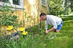 Gardening at Karlsfors, Värmland Sweeden Sandbox, Gardening, Plants, Garten, Flora, Plant, Lawn And Garden, Planting, Horticulture