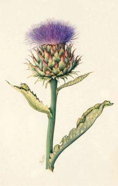 Shade Garden Flowers And Decor Ideas Membres Illustration Botanique, Plant Illustration, Botanical Illustration, Botanical Flowers, Botanical Prints, Impressions Botaniques, Thistle Flower, Jazz Art, Botanical Drawings
