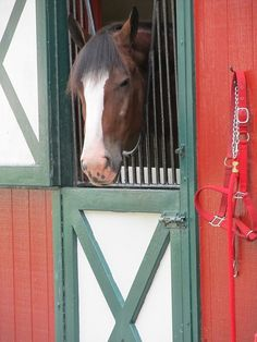 Poking his head out of the doorway  #equihealthcanada #horse #firstaid #horses #ehc