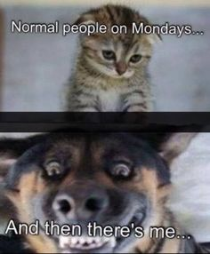 Oh, Monday! I Hate Mondays, Weekday Quotes