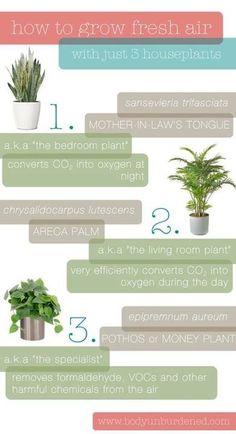 Home-grown air purifiers