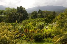 Belize Rainforest | Rainforest.....Belize | Belize