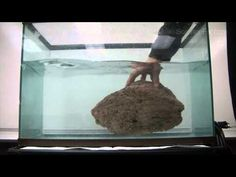 Does Mass Affect Whether an Object Floats or Sinks in Water? and other cool science videos. Science Videos, Science Resources, Science Lessons, Science Activities, Science Projects, Science Web, Science Classroom, Teaching Science, Science Education