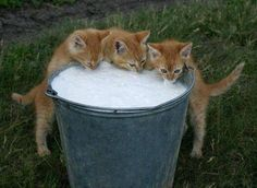 oh I remember all the kittens I have seen doing this.......