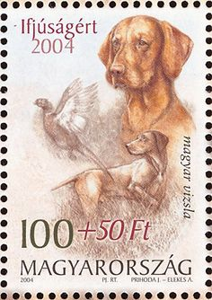 Sello: Hungarian Vizsla (Canis lupus familiaris), Common Pheasant ( (Hungría) (For Youth) Mi:HU Most Beautiful Dog Breeds, Beautiful Dogs, Common Pheasant, Hungarian Vizsla, Crazy Dog, Weimaraner, Stamp Collecting, All Dogs, Postage Stamps