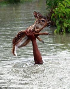 Mutiger Junge in Bangladesch rettet jungen Hirsch aus Sturmflut