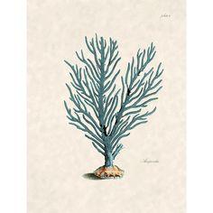 Beach Decor Sea Fan Print for Coastal Decor ($10) ❤ liked on Polyvore