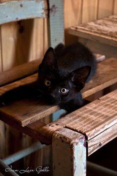 Beautiful Black Cats ♥
