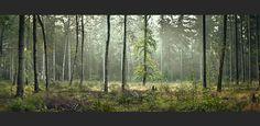 Der Herbst hält Einzug - Waldpanorama