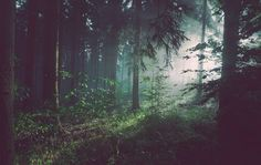 Wood, forest, mist and fog HD photo by Sebastian Unrau ( on Unsplash Hd Photos, Nature Photos, Stock Photos, Nature Images, Forest Wallpaper, Nature Wallpaper, Desktop Wallpapers, Wallpaper Wallpapers