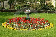 Záhon Tulipánů a Macešky ve formální zahradě.