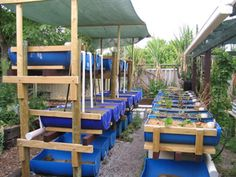 Aquaponics is based on productive systems as they are found in nature. It can be loosely described as the combination of aquaculture and hydroponics and this is where the name aqua-ponics originates.
