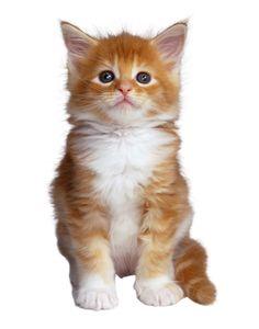 gato.jpg (870×1109)