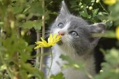Sometimes you just have to stop and smell the flowers…..