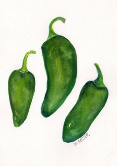 Jalapeno Peppers  watercolor Vegetable series by SharonFosterArt, $16.00