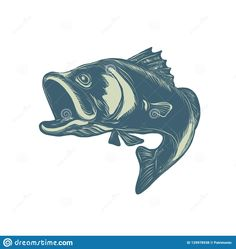 Scratchboard style illustration of a barramundi or Asian sea bass, a species of catadromous fish in family Latidae of order Perciformedone, jumping on scraperboard on isolated background. Fish Sketch, Scratchboard, Sea Bass, Etchings, Asian, Retro, Illustration, Style, Swag