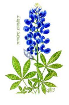 bluebonnet clip art bluebonnet coloring page by christiane rh pinterest com Blue Flower Clip Art Bluebonnet Field Clip Art
