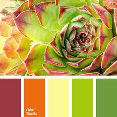 Color Palette. lime, yellow, orange, red hues