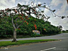 Carretera 987  En El pueblo  de Fajardo. las misma te conduce  hasta el Hotel conquistador y el  parque pasivo de las Croabas. •Municipio Autonomo de Fajardo. Fajardo,Puerto Rico ☆