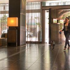 Dog friendly hotel in San Diego, CA - Hotel Palomar, a Kimpton Hotel – San Diego