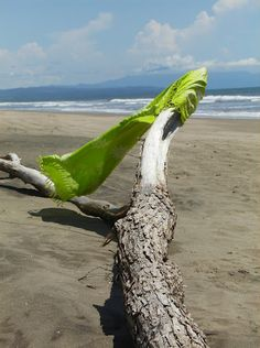 Playa Las Tortugas in Nayarit, Mexico.  One of my favorite photos.
