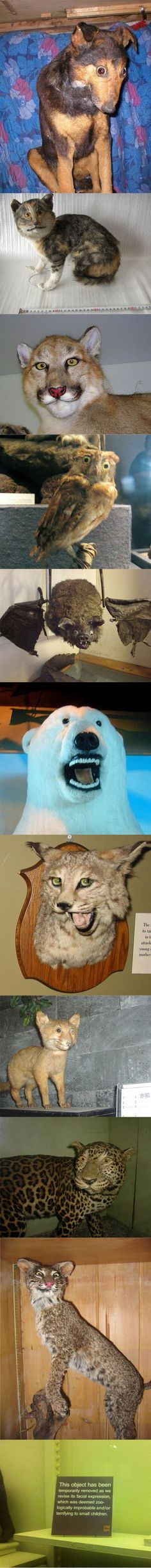 bad taxidermy. I AM CRYING OH MY GOSH THIS IS HILARIOUS