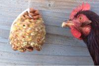 Home Farm Ideas : Chicken Treat - Pine Cone Treat Chicken Treats, Chicken Feed, Chicken Coops, Keeping Chickens, Raising Chickens, Pet Chickens, Chickens Backyard, Backyard Farming, Mini Farm